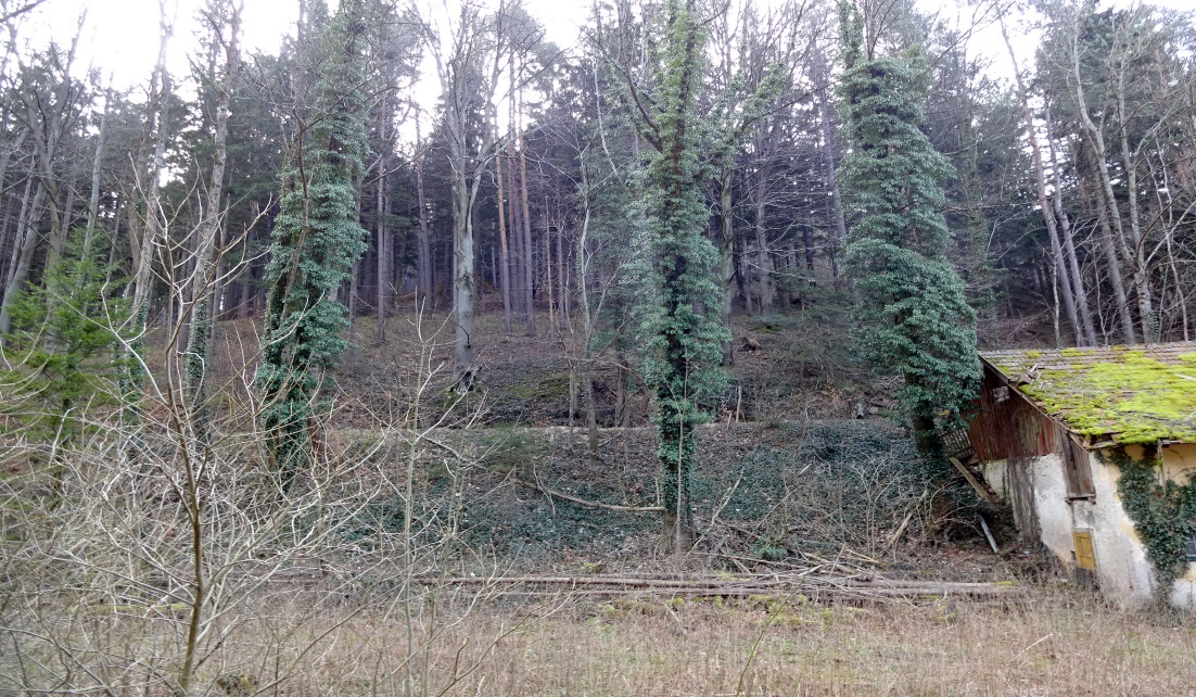 wohnTraum Immobilien Grundstück Raach am Hochgebirge
